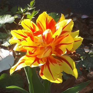 Image-fleur